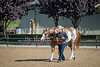 Color & Gelding classes-165
