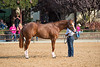 Stallions-126