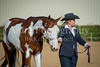 Color & Gelding classes-101