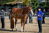 Color & Gelding classes-142