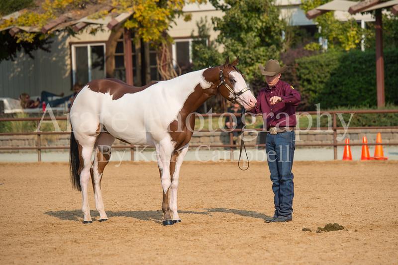 Stallions-116