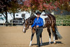 Color & Gelding classes-106