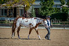 Color & Gelding classes-175