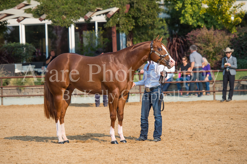 Stallions-124
