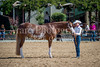 Color & Gelding classes-157