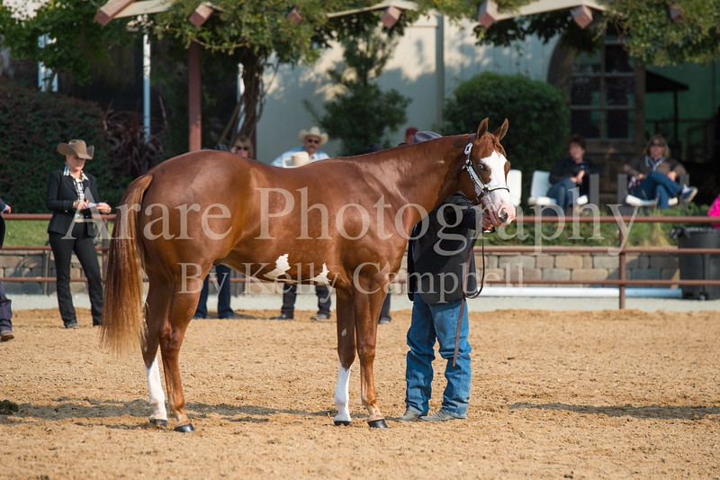 Stallions-127
