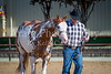 Color & Gelding classes-164