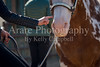 Color & Gelding classes-110