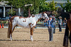 Color & Gelding classes-177