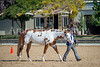 Color & Gelding classes-173