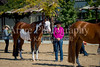 Color & Gelding classes-146
