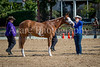 Color & Gelding classes-160