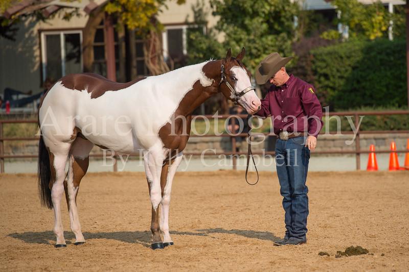 Stallions-117