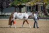 Color & Gelding classes-172