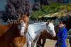 Color & Gelding classes-133