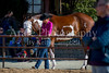 Color & Gelding classes-109