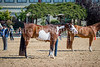 Color & Gelding classes-179
