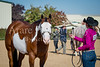 Color & Gelding classes-182
