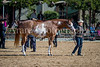 Color & Gelding classes-167
