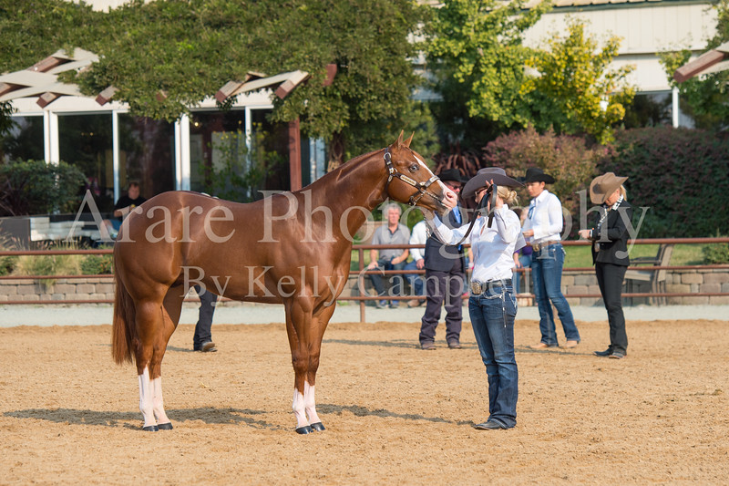 Stallions-118