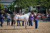 Color & Gelding classes-162