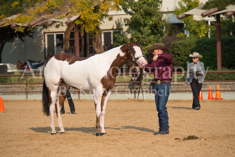 Stallions-113