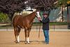 Stallions-123