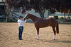 Stallions-109