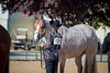 Color & Gelding classes-138