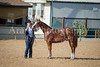Color & Gelding classes-113