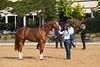 Stallions-119