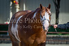 Color & Gelding classes-166