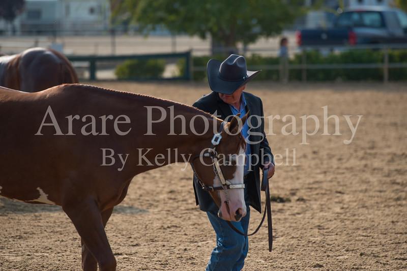 Stallions-103