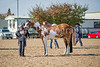 Color & Gelding classes-186