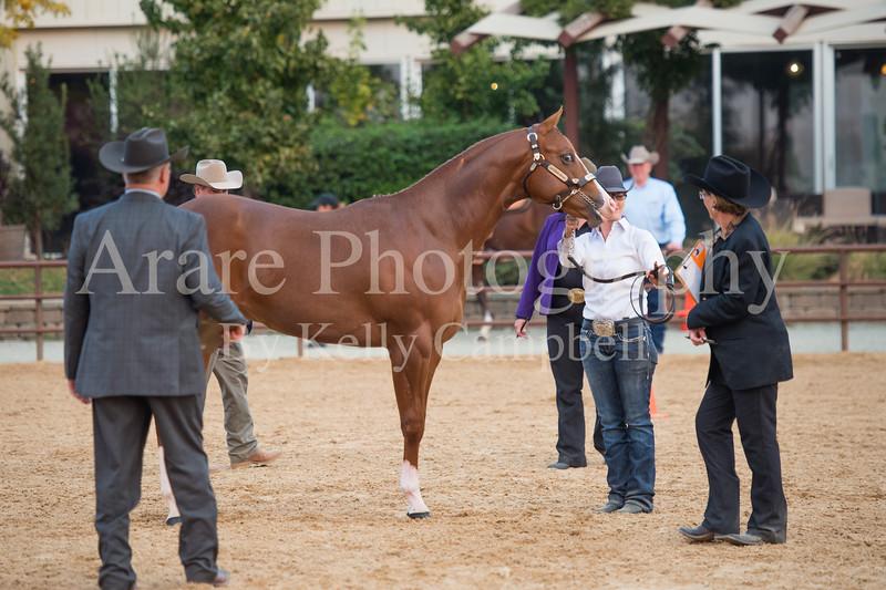 Stallions-214