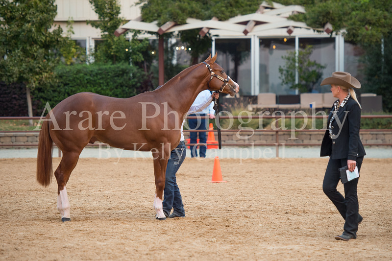 Stallions-213