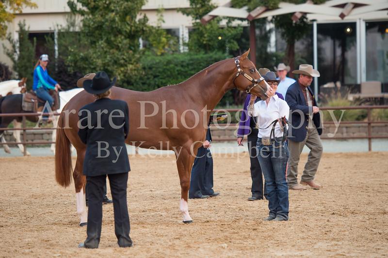 Stallions-215