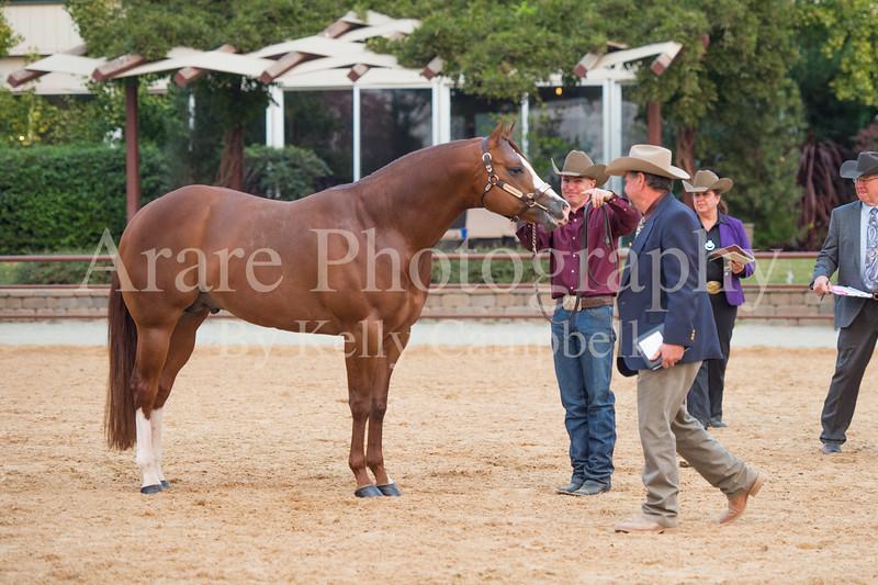 Stallions-210