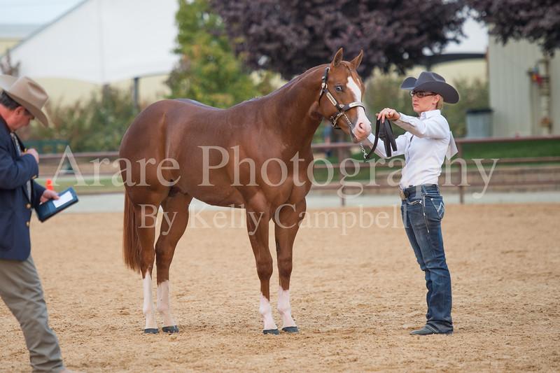 Stallions-220