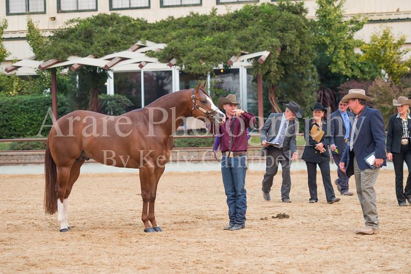 Stallions-206