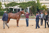 Stallions-211