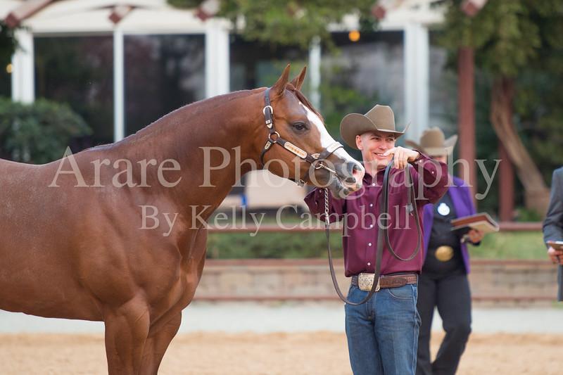 Stallions-208