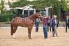 Stallions-204