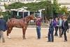 Stallions-212