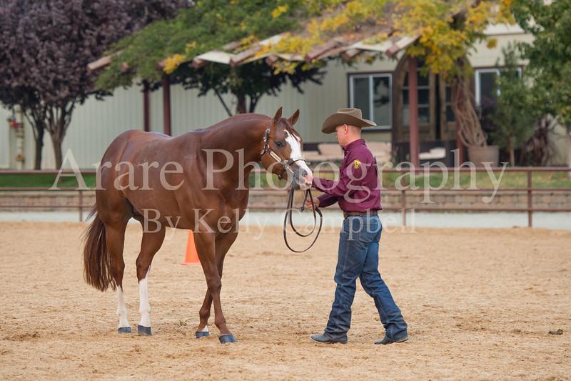Stallions-201