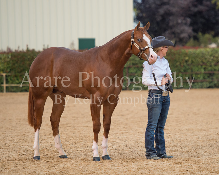 Stallions-225