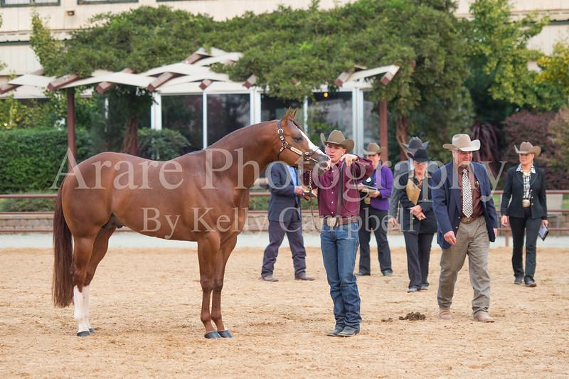 Stallions-205