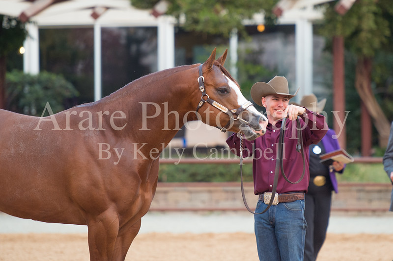 Stallions-207