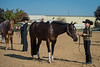 SPHS Youth Mares-133