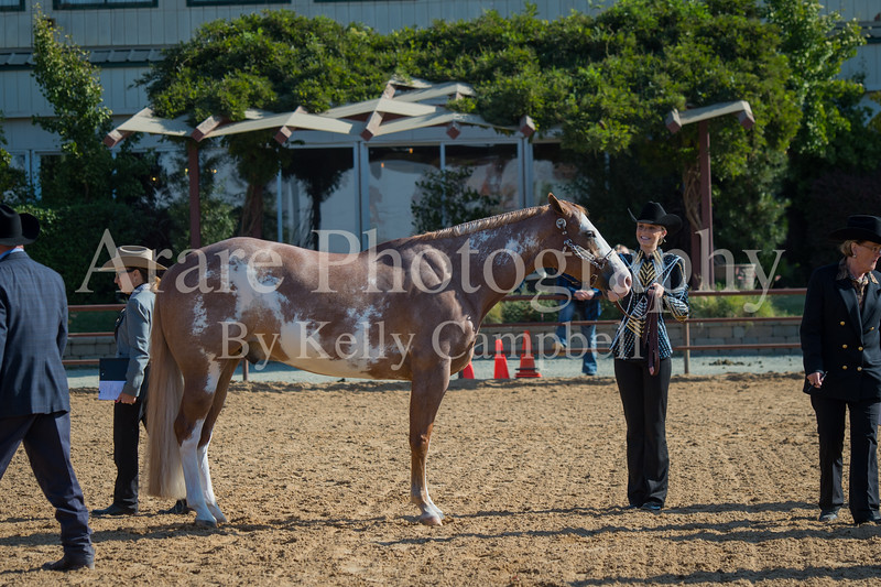 SPHS Youth Mares-116
